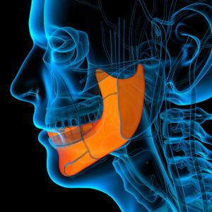 medical illustration of a jaw bone